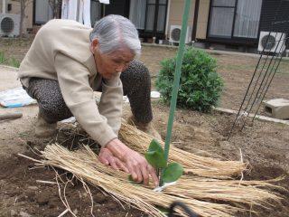 GH菜の花 畑に夏野菜を植えました!